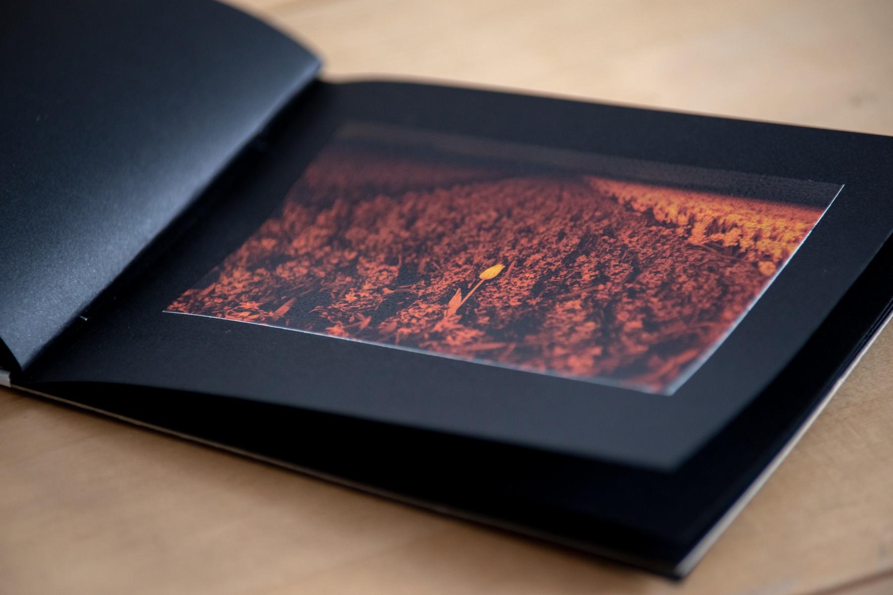 booklet-tulpen-3