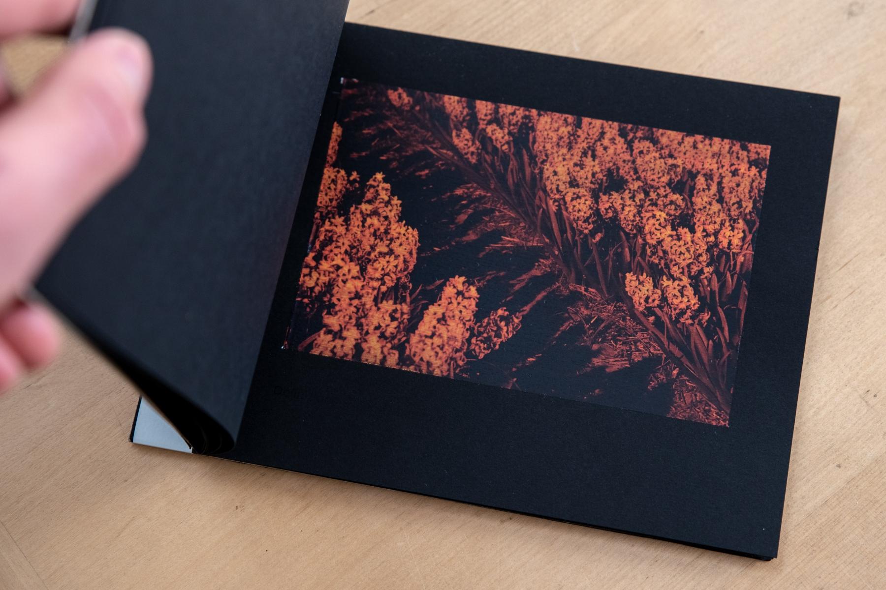 booklet-tulpen